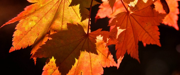 Grass Roots – Is Your Garden Doing Autumn This Year?