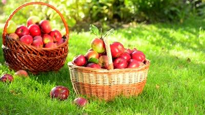 On Your Plot – Feeling Fruity