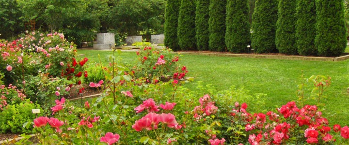 Grass Roots – What to do if your garden is out of control