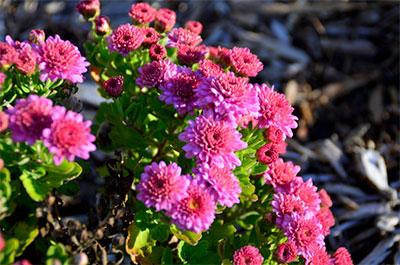 Gardening Tips, Your Garden in September